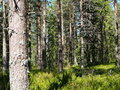 Norra Mora Vildmark Natural Re...