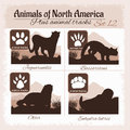 North America animals and animal tracks, footprints. Royalty Free Stock Photo