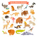 North America animals  vector illustration. Big vector set.  on white background Royalty Free Stock Photo