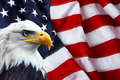 North american bald eagle on american flag in background Stock Images
