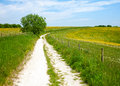 North downs way path he national trail in southern england Royalty Free Stock Images