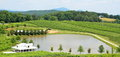 North georgia vineyard and pond overlooking a in usa Royalty Free Stock Images