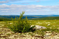 North mountain tundra Stock Images