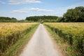 North Rhine-Westphalia, grain fields, barley fields and Royalty Free Stock Photo