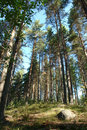 North russian forest. Stock Photos