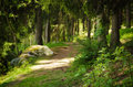 North scandinavian forest pine with path and stones sweden natural travel outdoors background Stock Image