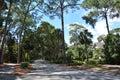 North Sea Pines Drive, Hilton Head Island tropical nature Royalty Free Stock Photo