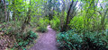 North West Hiking Trail through forest, Wide Panoramic Royalty Free Stock Photo
