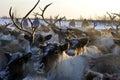 Northern aboriginals. Russia. Yamal. Nadym. Royalty Free Stock Photo