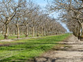 Northern california orchard in rural Royalty Free Stock Photos