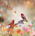 Northern cardinals perched in the garden Royalty Free Stock Photo