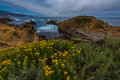 Northern coastal scrub Point Lobos State Park California Royalty Free Stock Photo