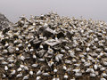 Northern gannets in birds colony Stock Photos