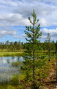 Northern landscape with swamp finland lapland Royalty Free Stock Photography