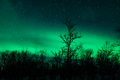 Northern lights in sweden forest a high resolution image of Stock Photography