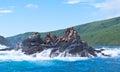 Northern sea lions of  Sakhalins island Moneron Royalty Free Stock Photos