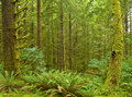 Northwest Rain Forest 2 Royalty Free Stock Photo
