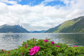 Norwegian fjord with a rose in the foreground Stock Image