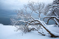 Norwegian winter fjord landscape with tree a Royalty Free Stock Images