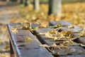 Nostalgia dead leaves on a bench in a park Stock Photography
