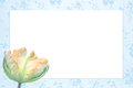 Nostalgic floral frame with beautiful tulip flower tricolor light blue and yellow Stock Photos