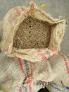Not roasted coffee beans in jute sack top view, Colombia Royalty Free Stock Photo