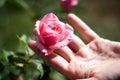 Note einer Rose Lizenzfreies Stockbild