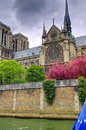 Notre dame cathedral with spring bloom the iconic de paris in paris france is radiant the cherry trees in full this view of the is Royalty Free Stock Image