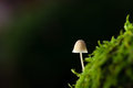November white forrest mushroom on moss macro picture with blurred background of a green Stock Photo