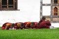 Novices learn paro bhutan september the teachings of the buddha on september in paro bhutan Stock Image