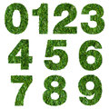 Numbers made of green grass isolated on white Stock Image