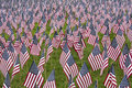 Numerous commemorative us flags on green grass Royalty Free Stock Photo