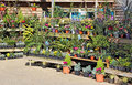 Nursery garden plants Royalty Free Stock Photo