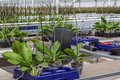 Nursery of orchids overview Royalty Free Stock Photo