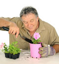 Nurseryman Plants Seedlings Royalty Free Stock Photos
