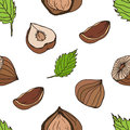Nut seamless on white background. Hand drawn colorful pattern with hazelnut.