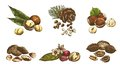Nut set various kinds of nuts of sketches made by hand Royalty Free Stock Photos