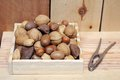 Nut in shell Royalty Free Stock Photo