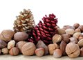 Nut in shell with pine cones Royalty Free Stock Photography