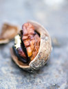 Nut on the table. close up Royalty Free Stock Photo