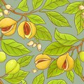 Nutmeg vector pattern