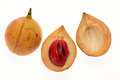 Nutmeg sectional view with seed Royalty Free Stock Image