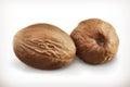 Nutmeg vector icons