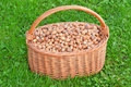 Nuts in basket. Hazelnuts in wicker hamper Stock Image