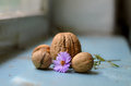 Nuts with a floweret large nut on background little Royalty Free Stock Images
