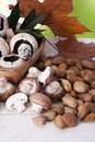 Nuts and mushrooms still life with almonds fall season Royalty Free Stock Images