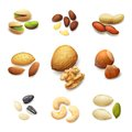 Nuts Realistic Set