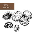 Nuts. Walnuts. Stock Photos
