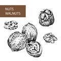 Nuts. Walnuts. Royalty Free Stock Images
