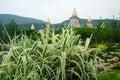 Nyanserad växt på porslinet lingshan för sceniskt område Arkivbild
